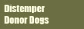 Distemper donor dogs